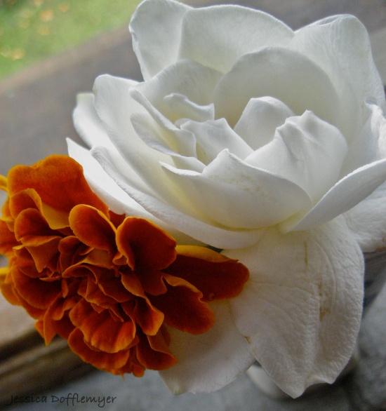 marigold_gardenia