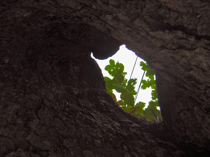 tree_hole2013-02-22