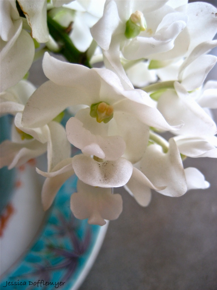 2013-03-11orchid