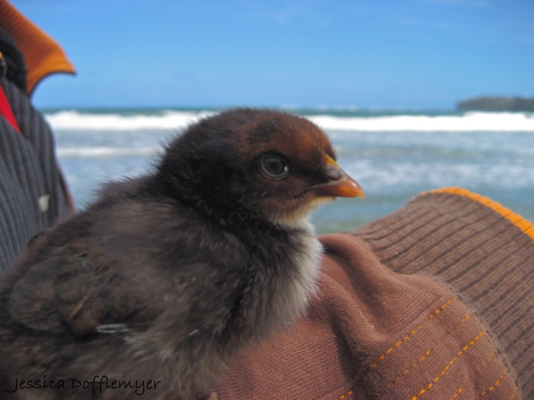2013-03-17beach_Merlin_close