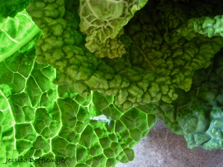2013-03-17cabbage_leaves