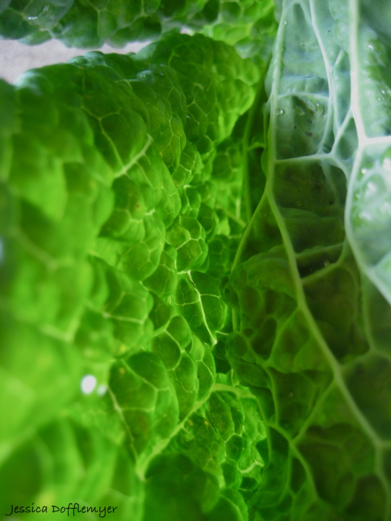 2013-03-17cabbage_tunnel