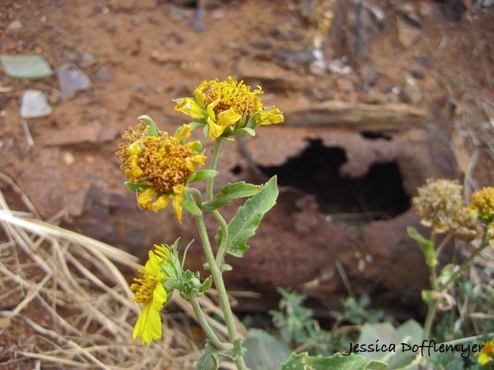 2013-04-08flowers_rust