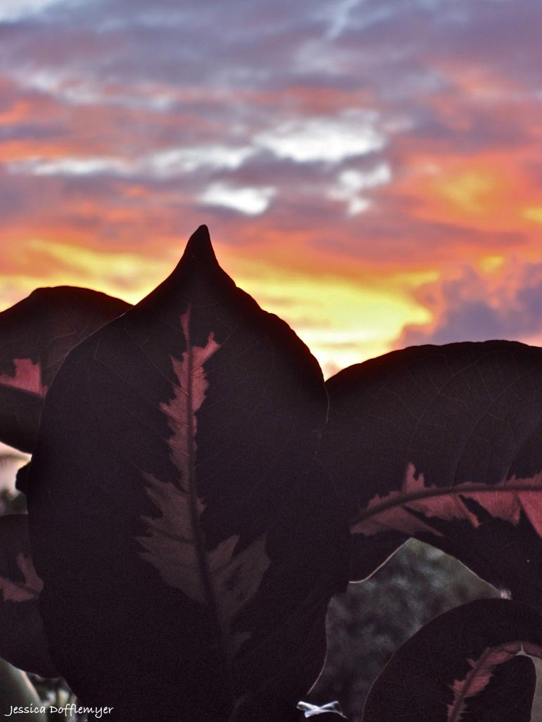 2013-07-26_pink sunrise