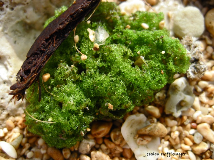 2013-07-31_sea moss