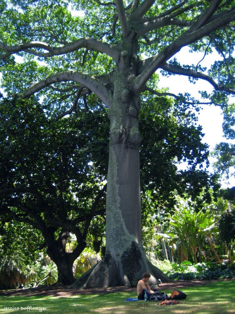 2013-08-09_tree_bohem