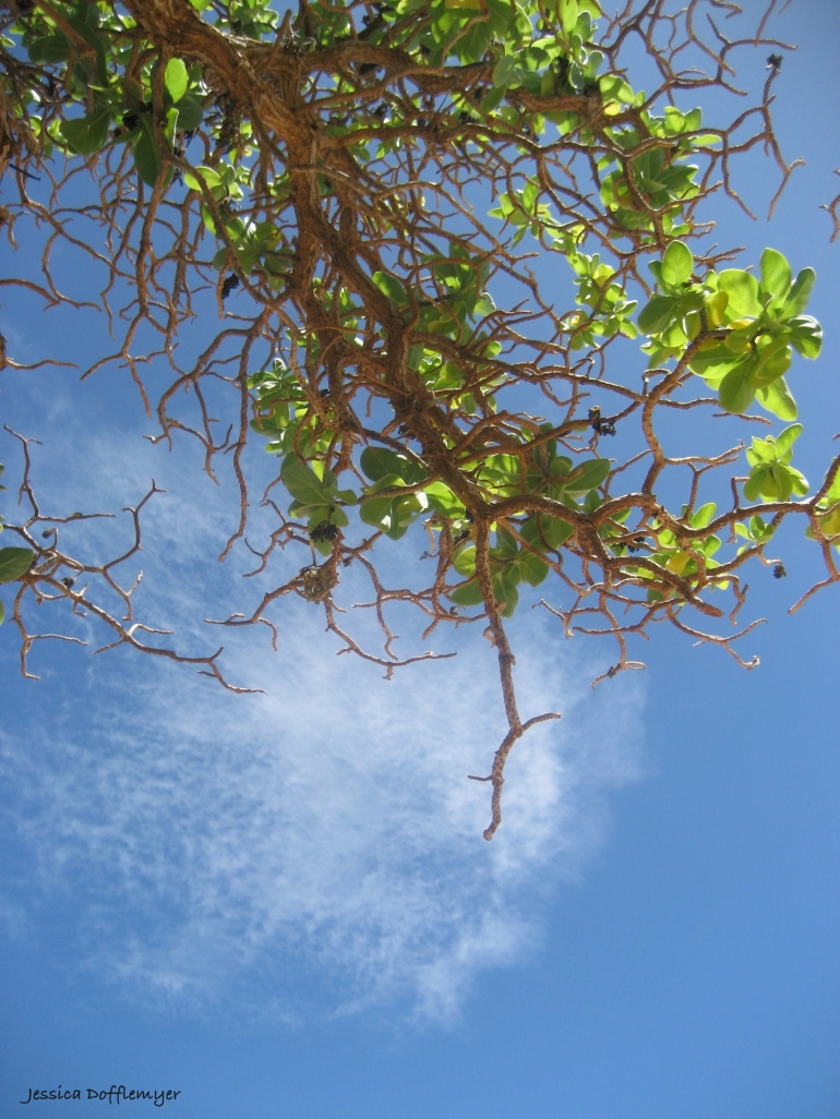 2013-09-02_naupaka sky