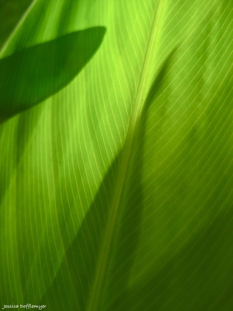 2013-09-11_water garden leaf