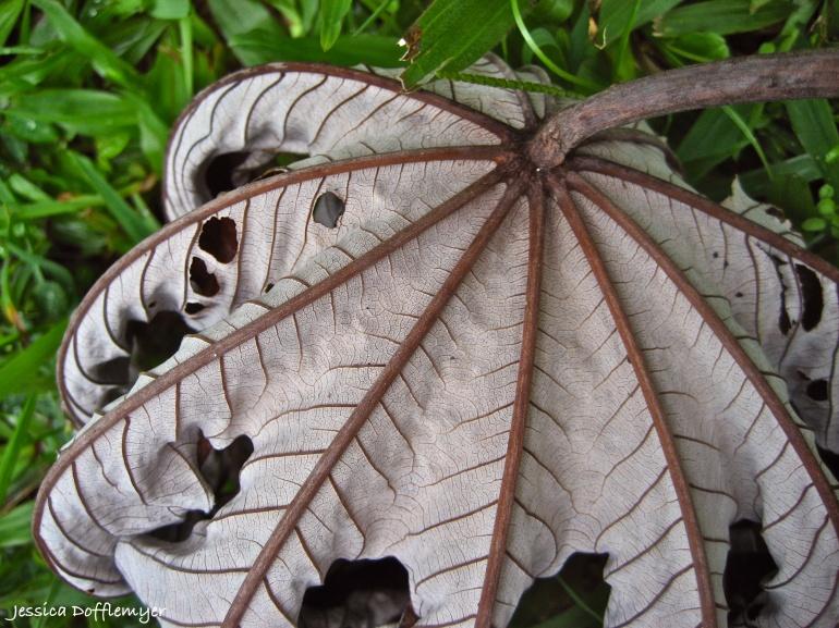 2013-10-03_leaf dead