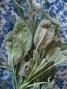 2013-10-28_sage&lavender