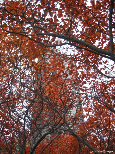 2013-11-14_leaves_building