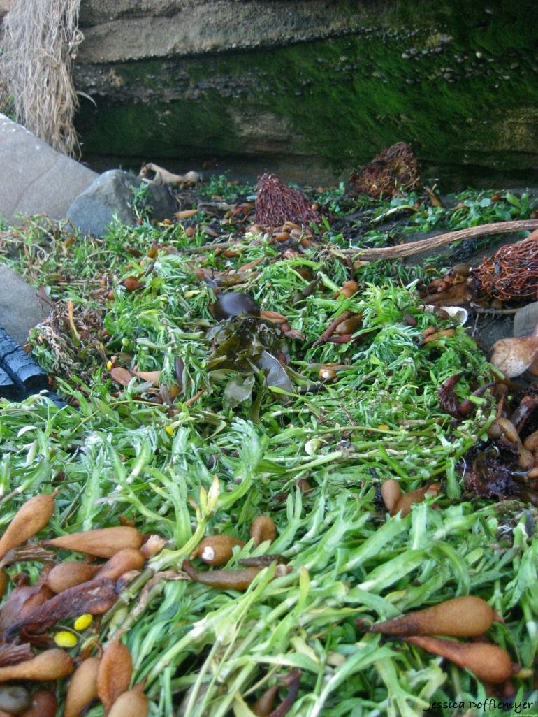 2014-01-03_seaweed path