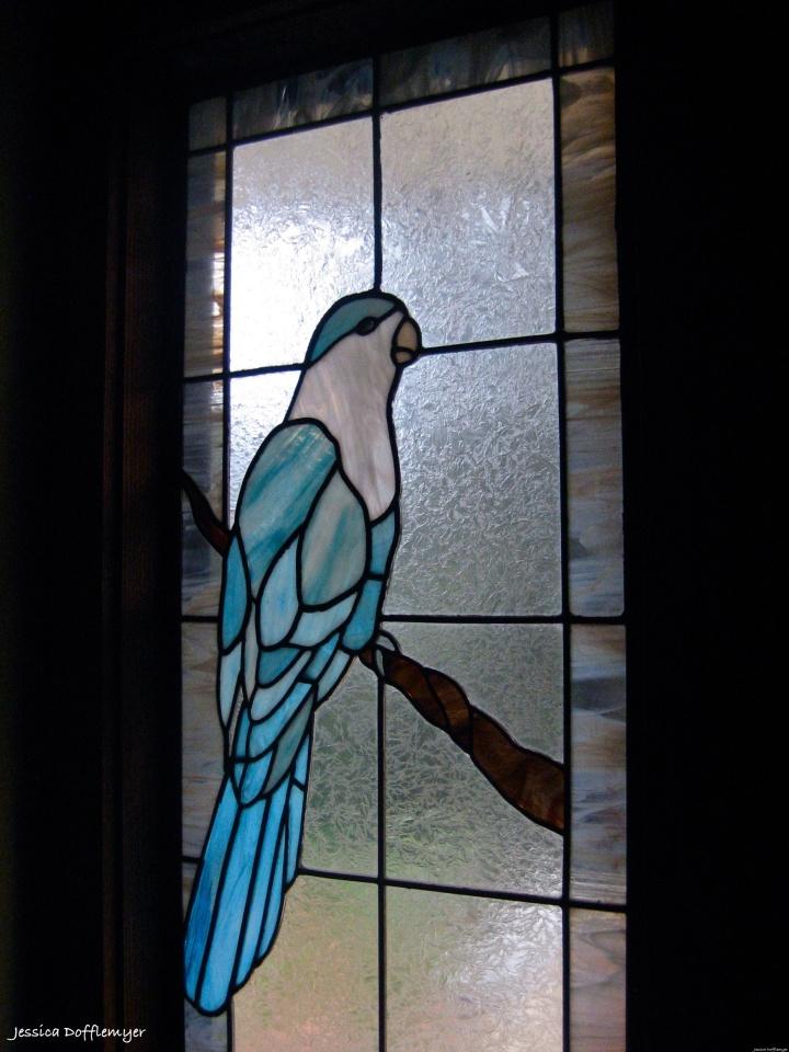 2014-02-10_parrot window
