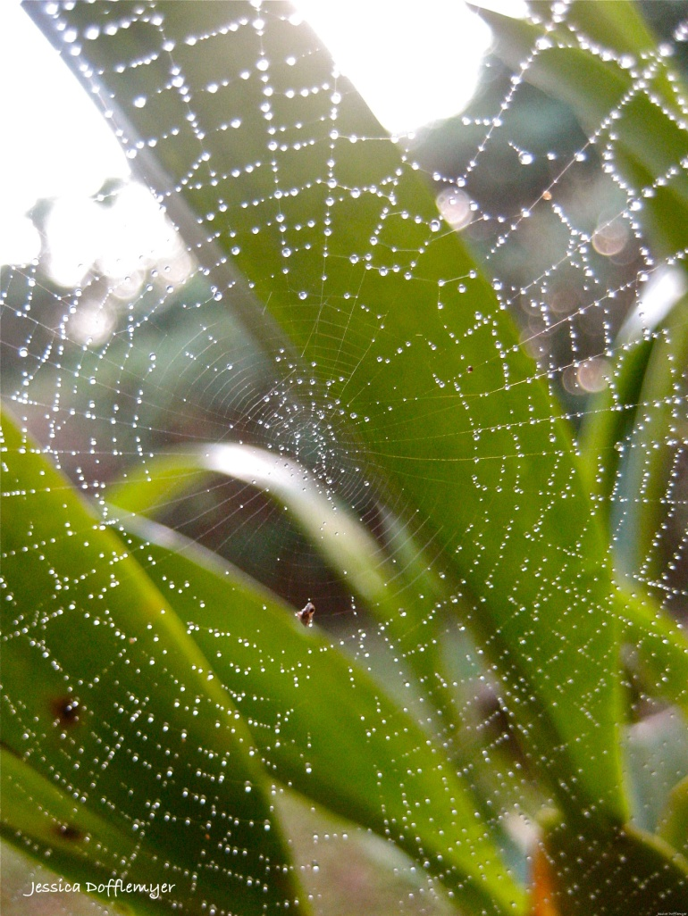 2014-02-25_wet web