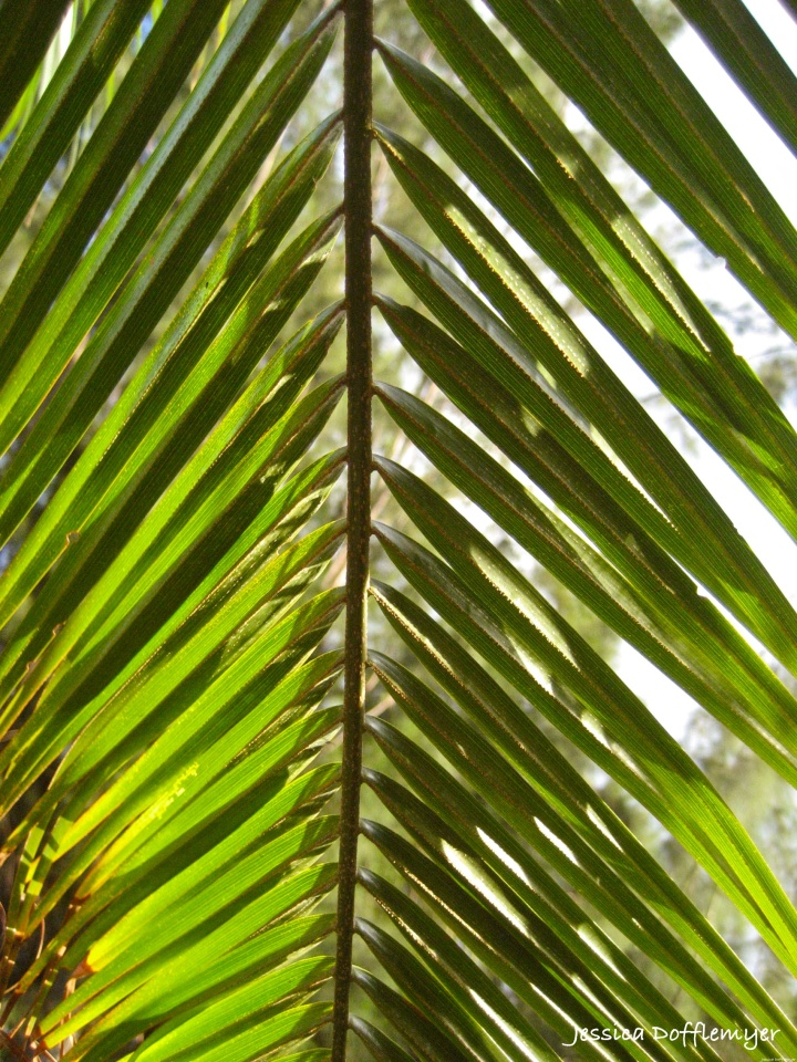 2014-02-28_frond
