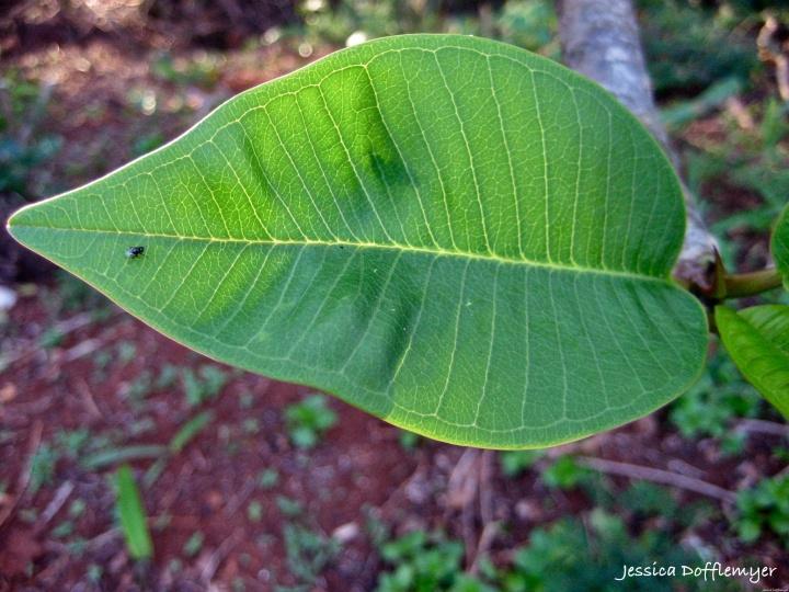 2014-02-28_leaf w fly