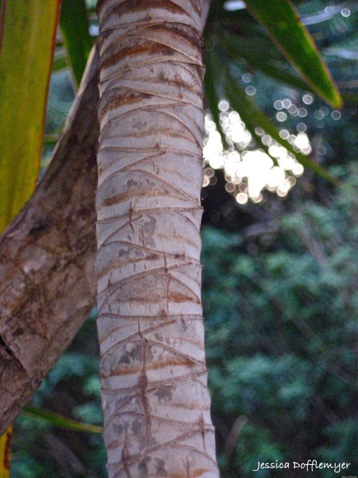 2014-02-28_money tree bark