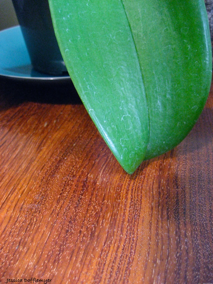 2014-03-10_orchid leaf