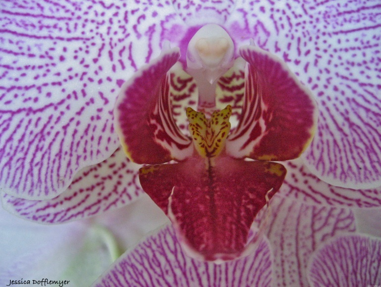2014-03-10_orchid