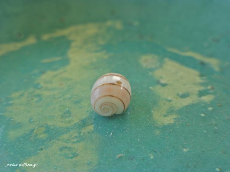 2014-03-21_spiral shell