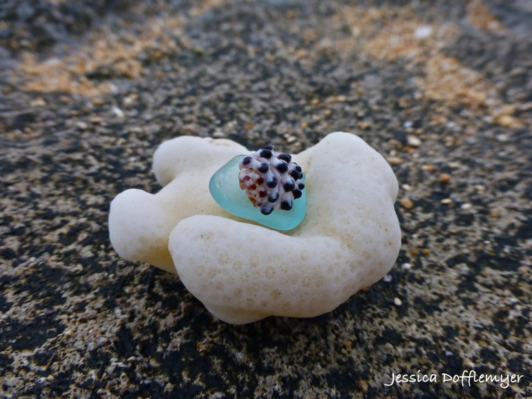 2014-03-24_coral shell
