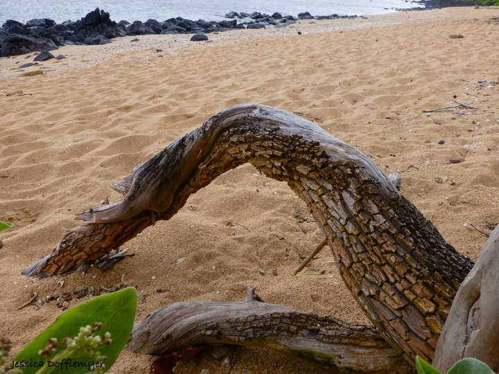 2014-03-25_roots beach