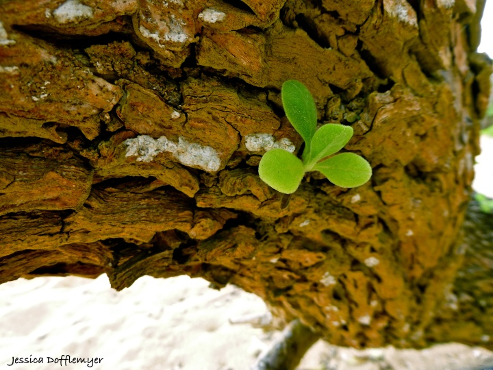 2014-03-26_bark sprout