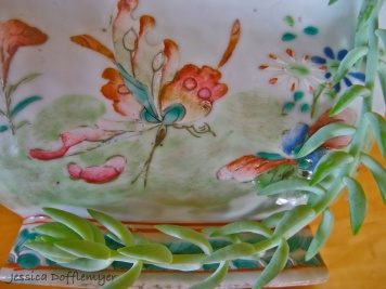 KS_butterfly_succulent