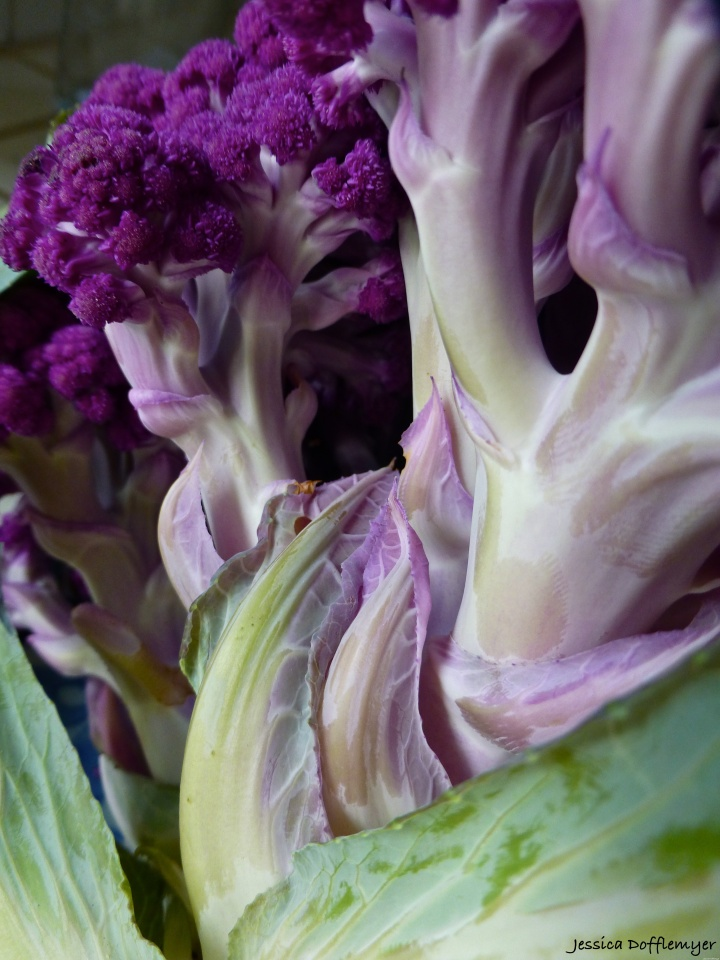 2014-04-06_purple cauliflower