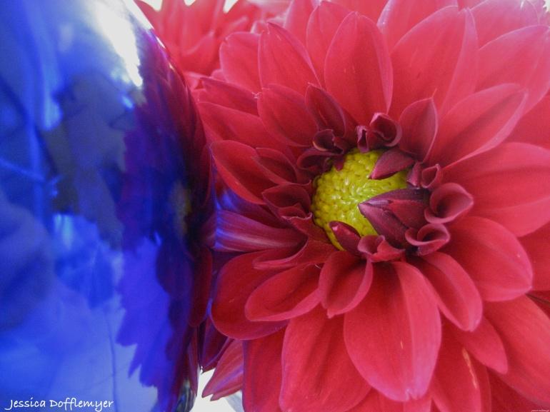2014-04-08_dahlia reflection