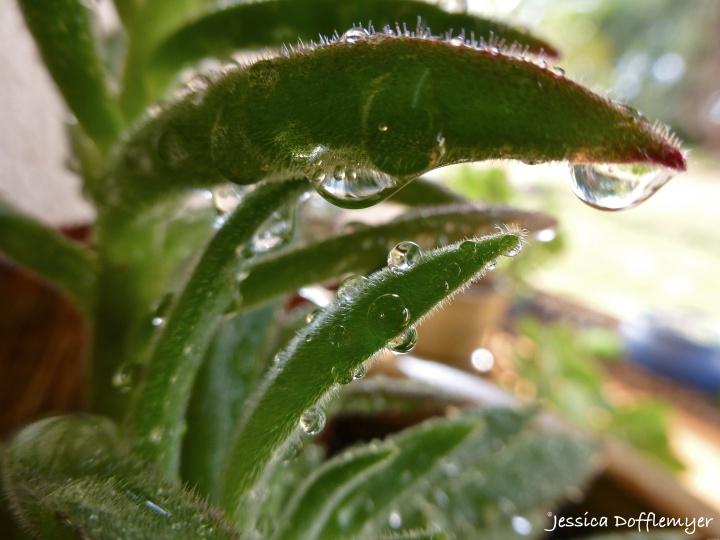 2014-05-16_succulent drops