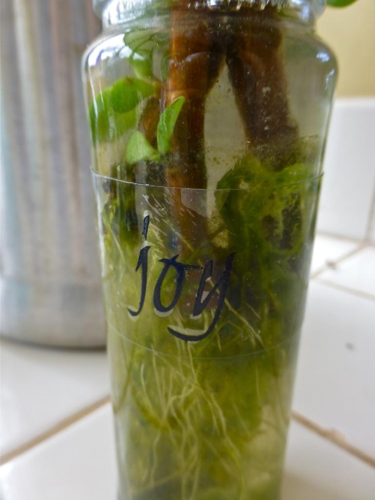 2014-06-16_joy taking root