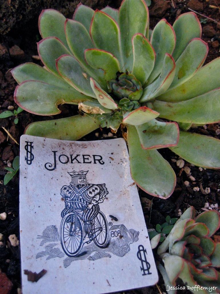 2014-07-04_joker card