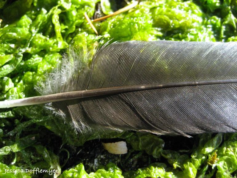 2014-08-26_BC_island_feather