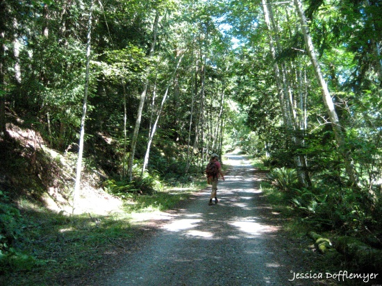 2014-08-29_forest path