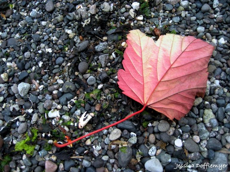 2014-08-29_red leaf