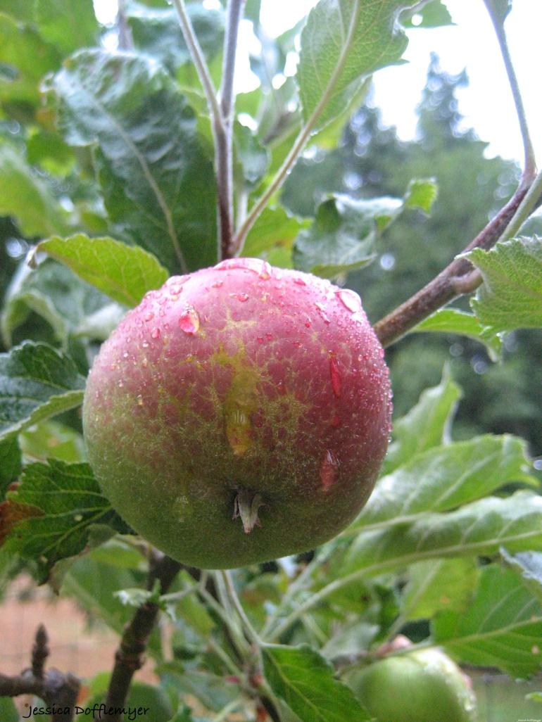 2014-09-09_apple