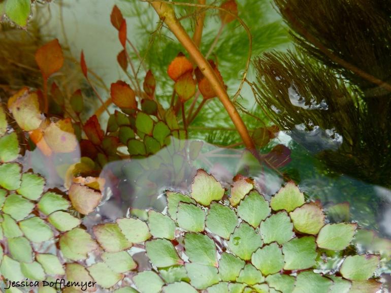 2014-10-14_mosaic close