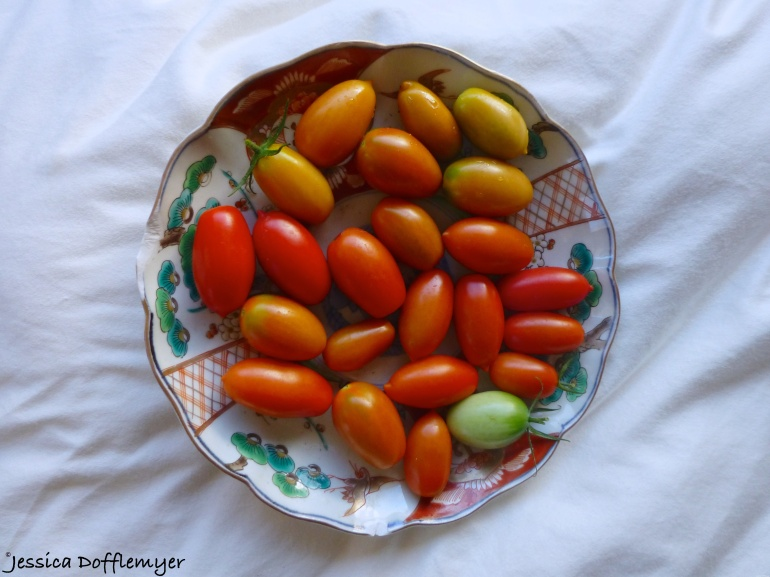 2014-10-16_tomatoes overview