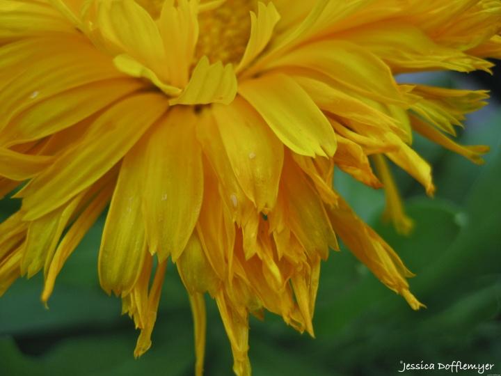 2015-05-27_petals