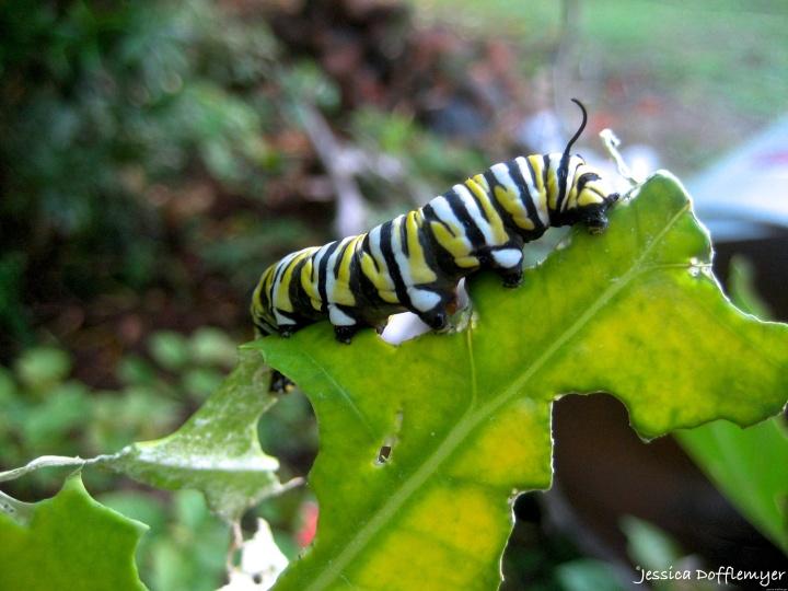 2015-09-02_caterpillar close