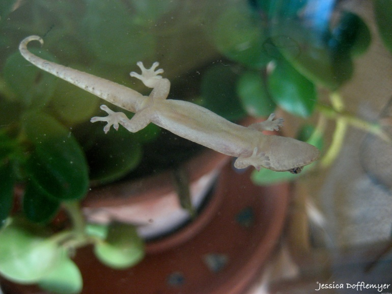 2015-09-07_gecko connected