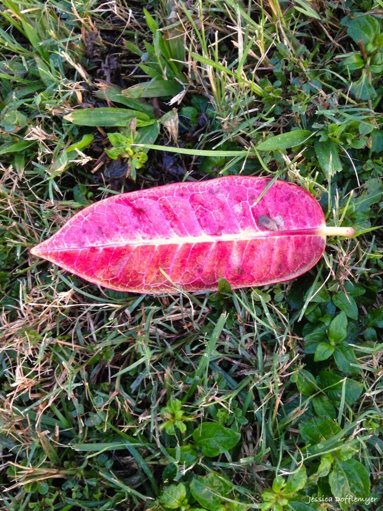 2015-11-17_red leaf