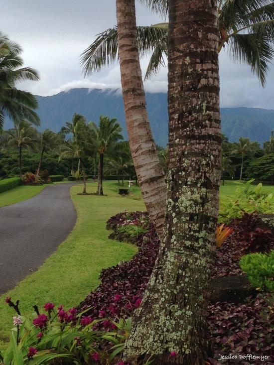 2015-11-20_manicured lawns
