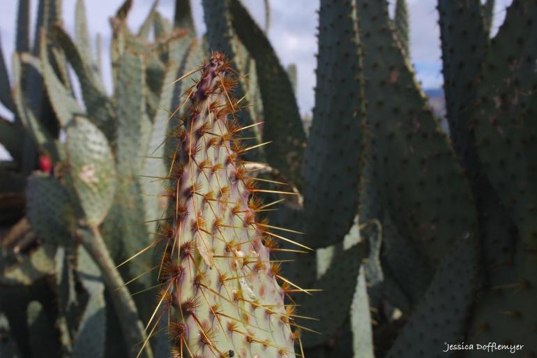 2016-01-14_cactus