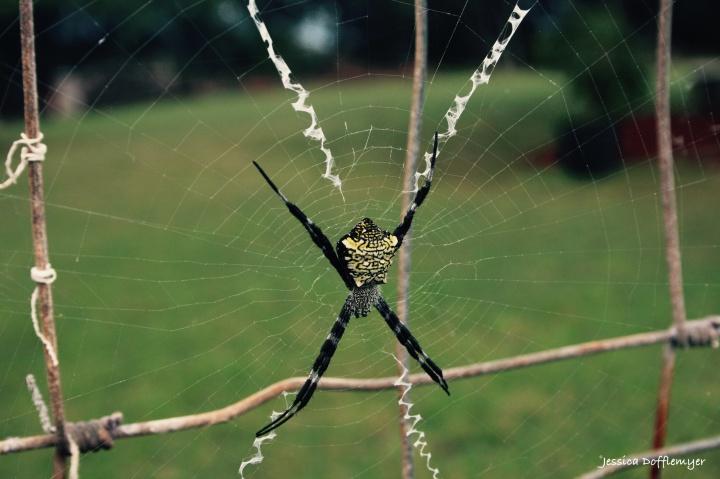 2016-01-29_spider