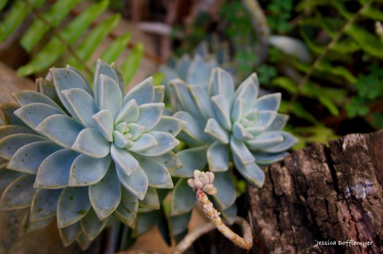 2016-07-15_succulents