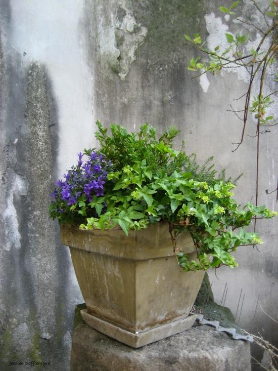 2016-09-30_czech_neruda-street-flower-pot